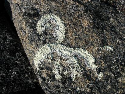 Лишайники на камнях